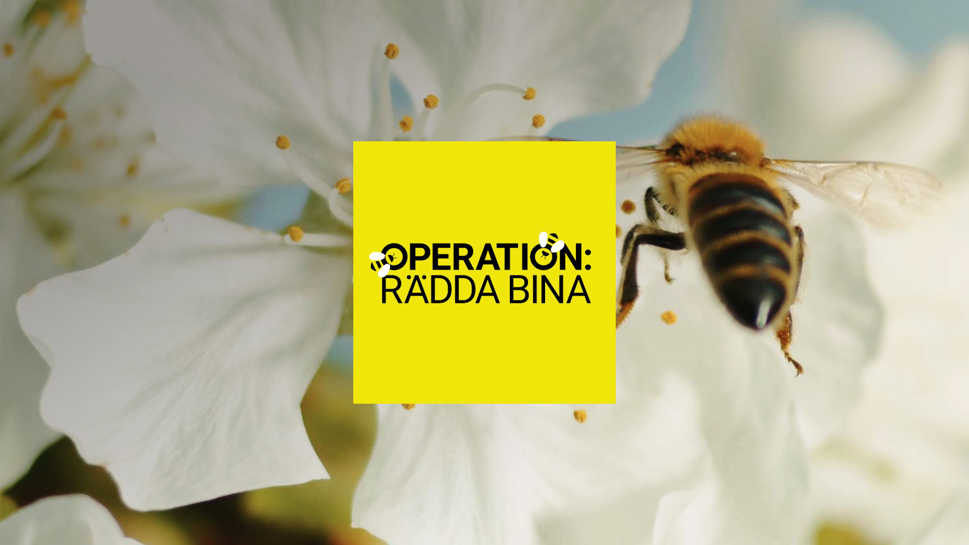 Operation: Rädda bina